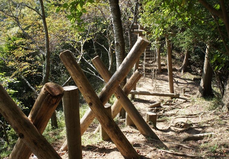 forest-asretick